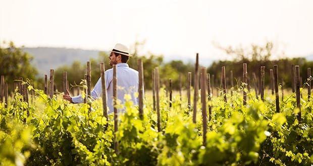 La Guía Gourmets 2012 premia al vino mallorquín