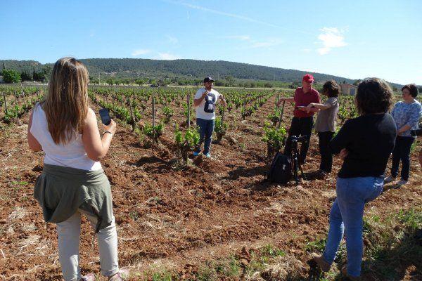 Manifiesto: Por una información vinícola de calidad